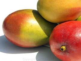 Mangos - seriously my favorite food.