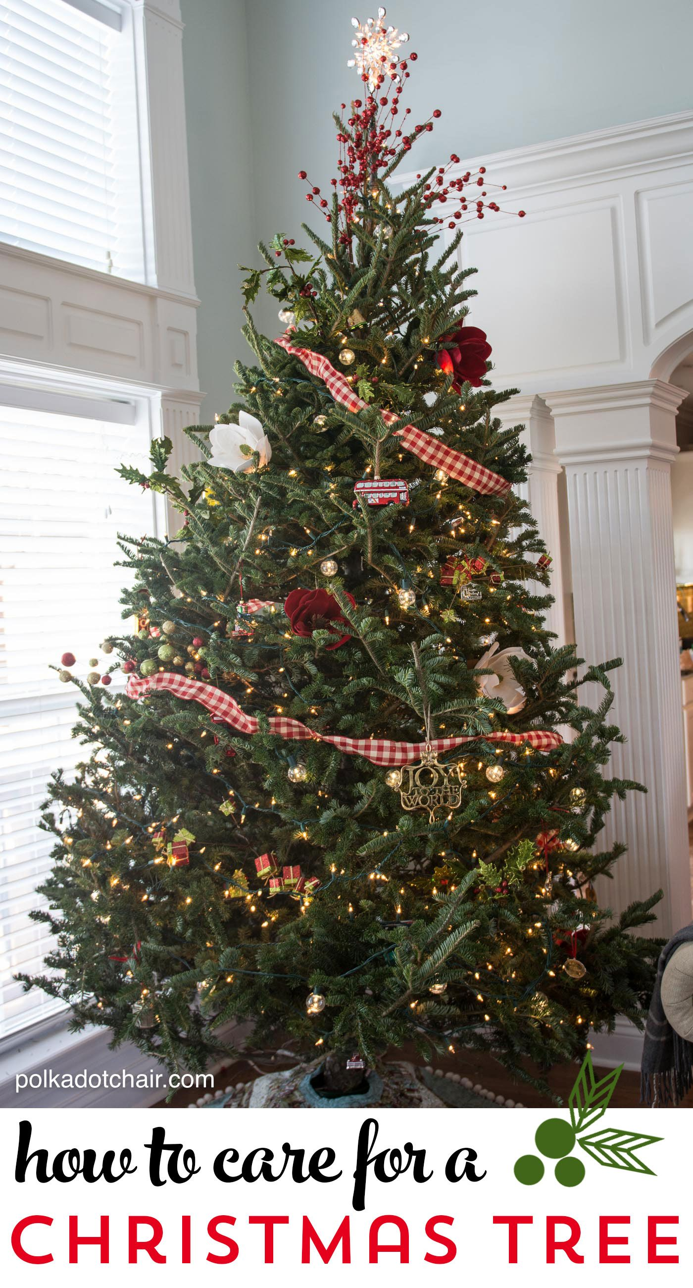 Tips And Tricks For Caring For A Fresh Christmas Tree Live Christmas Trees Holiday Christmas Tree Christmas
