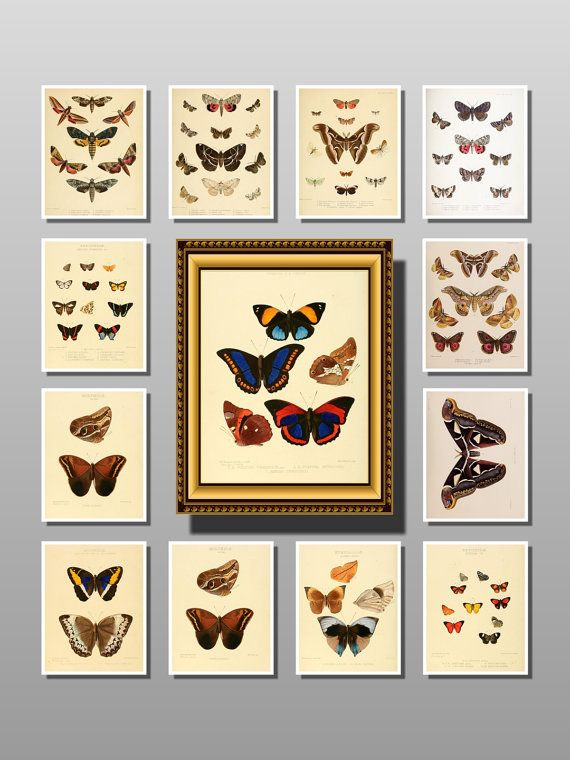 butterflies art butterflies framed butterflies by uniquevintagee, $3.99