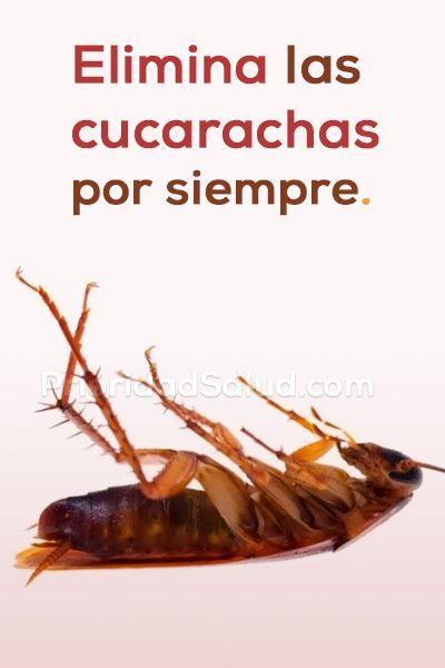 Ve Como Eliminar Las Cucarachas De Tu Casa U Oficina Por Siempre Con Estos Trucos Caseros Remedios Para Cucarachas Trucos De Limpieza Recetas De Limpieza
