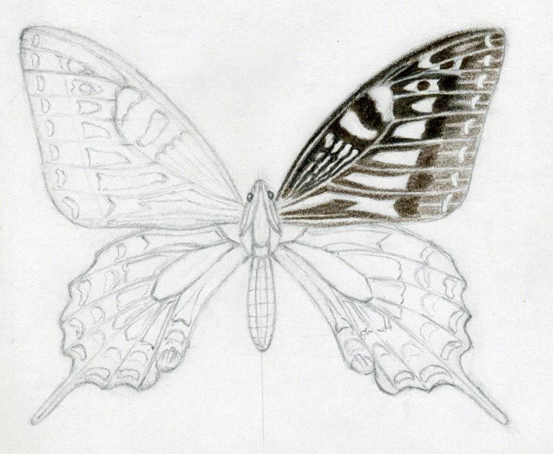 Butterfly drawings in color it up with colored pencils or simply draw it only by graphite pencil