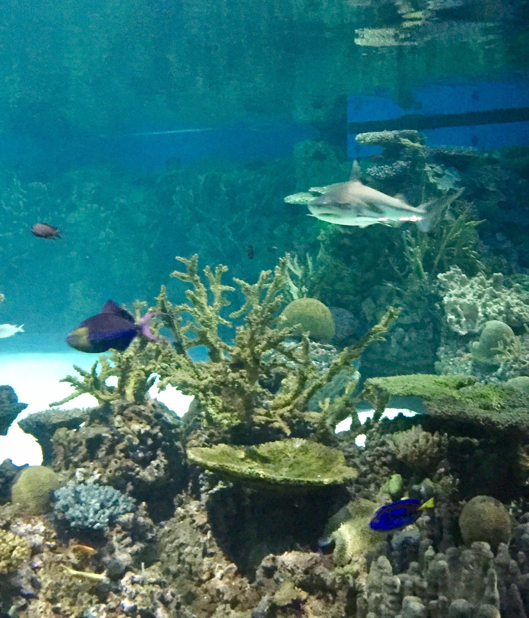 National Aquarium Baltimore, Maryland   Aquarium