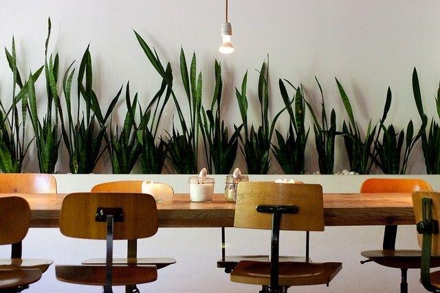 Sanseveria is makkelijk in onderhoud als bureau plant op kantoor