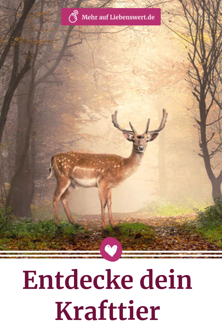 Krafttier Diese Bedeutung Hat Ihr Wegbegleiter Fur Ihr Schicksal Krafttier Tiere Spirituelle Bilder