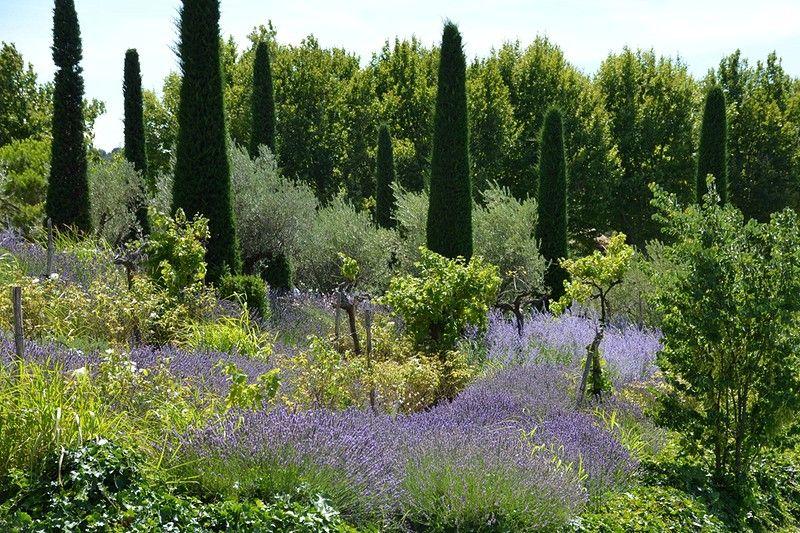 Garten Provence jardin provence garden planting and gardens
