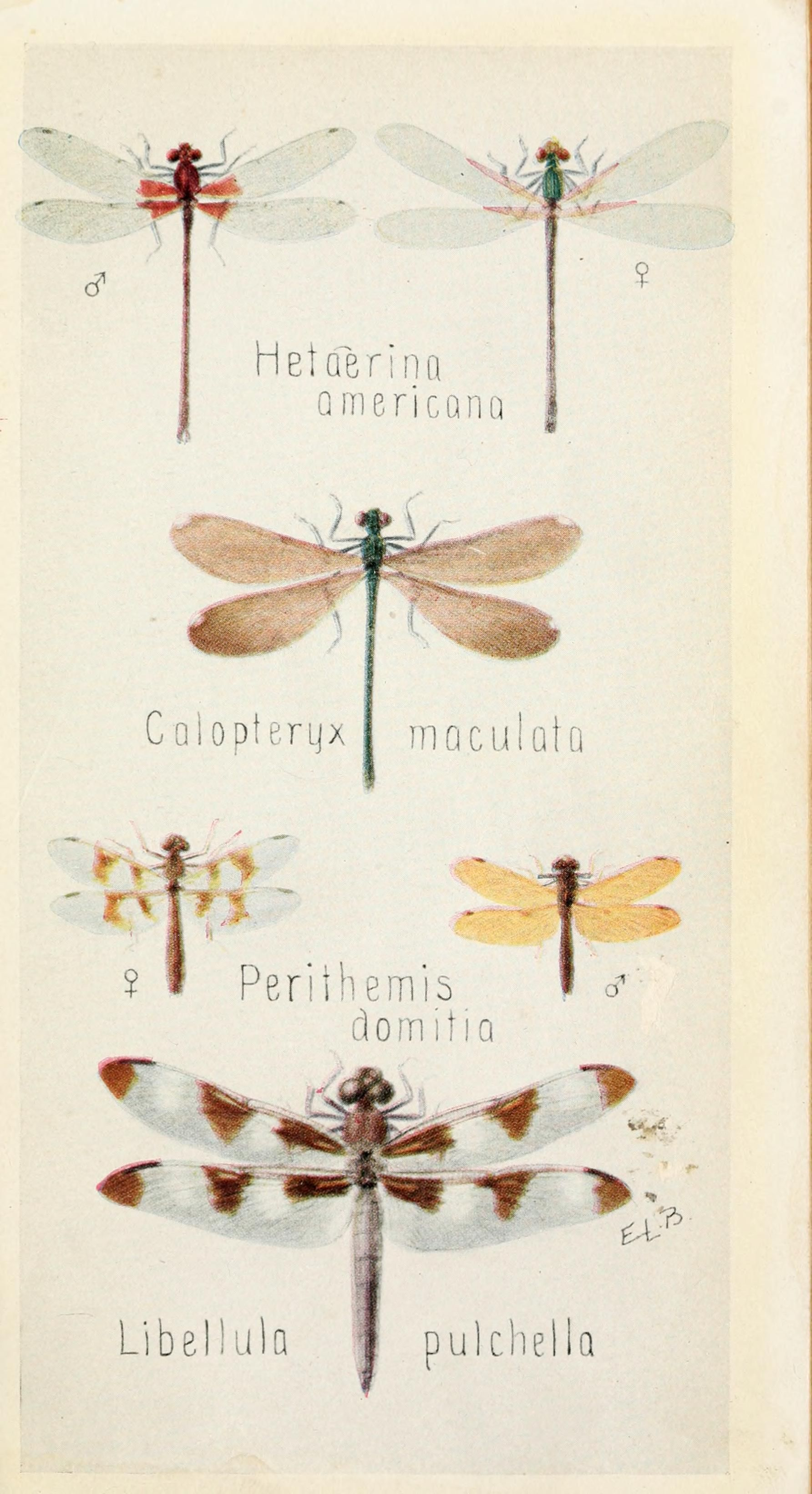 Field book of insects | Insects | Pinterest | Insects, Fields and ...