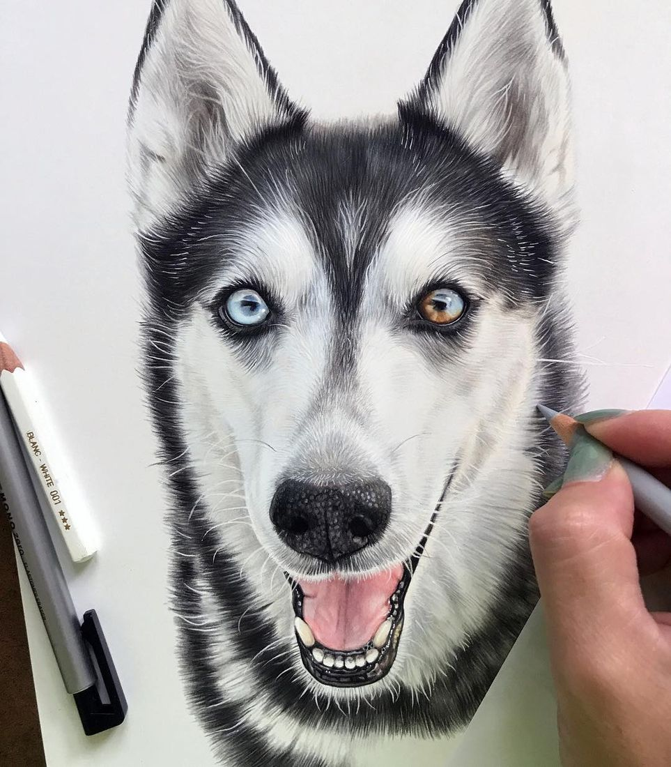 Realism With Animal Portrait Drawings In 2020 Husky Drawing