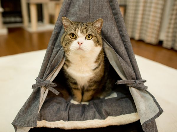 テントとまるとはな cat tent and maru hana 私信 まるです 猫用テント 猫 テント 猫のおしっこ