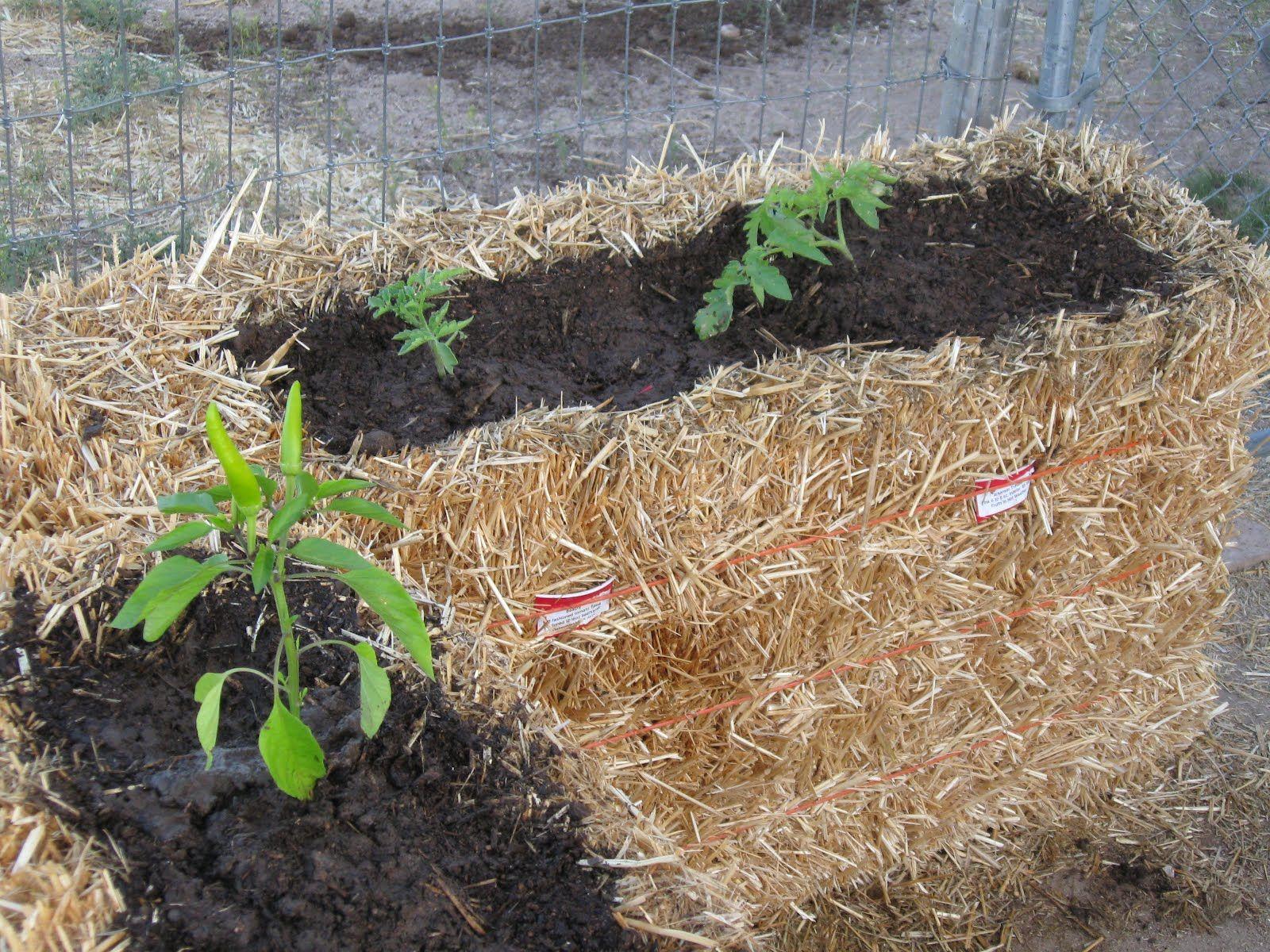 Straw Bale Gardening - Photo blog | Straw bales, Container gardening ...