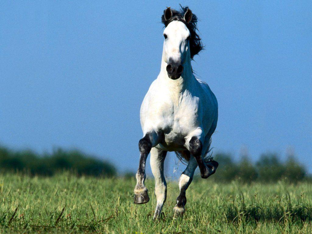 Fonds d 39 cran et wallpapers gratuits chevaux http - Chevaux gratuits ...
