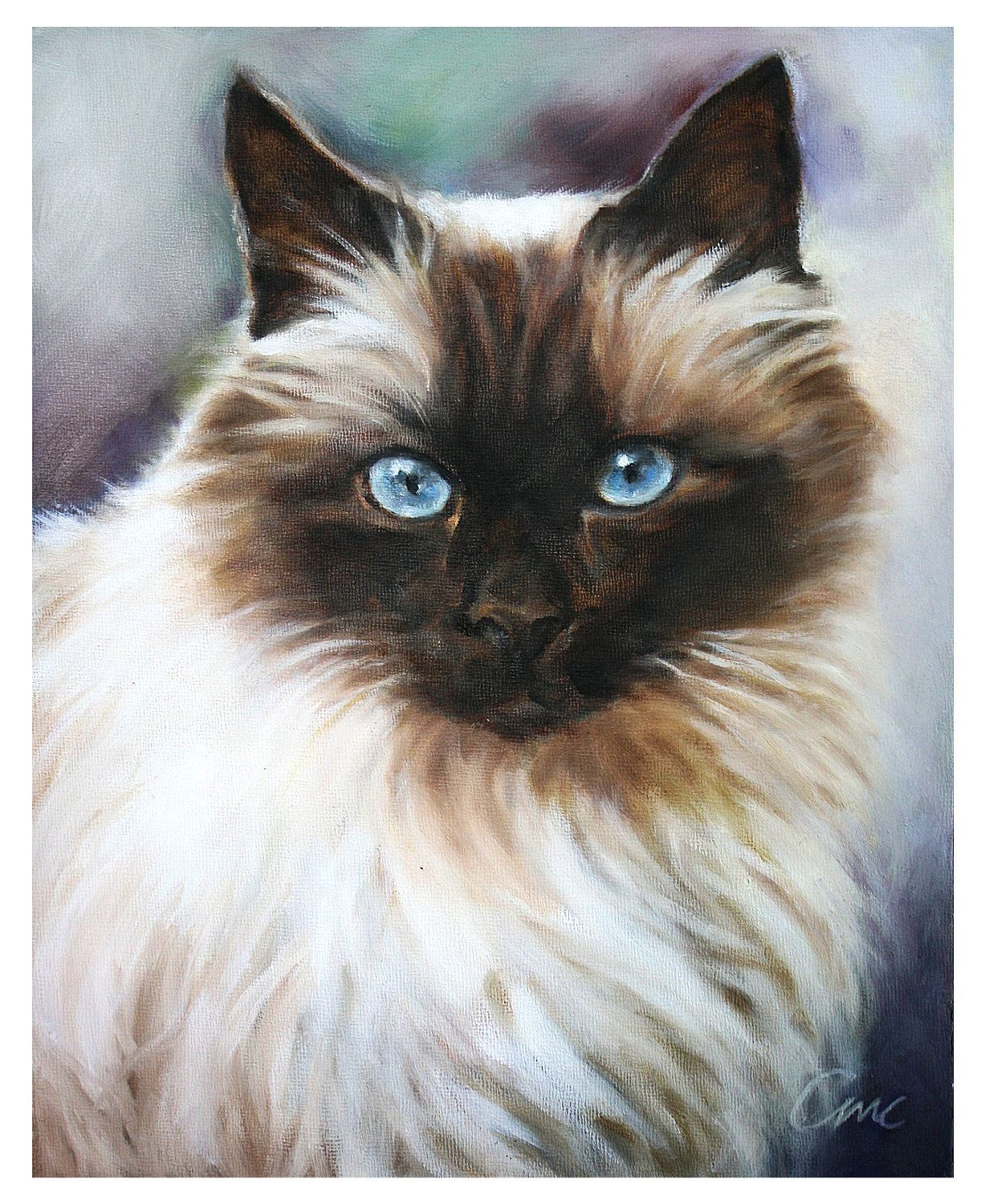 Fluffy Ragdoll Cat Giclee Art Print from original pastel painting 8x10