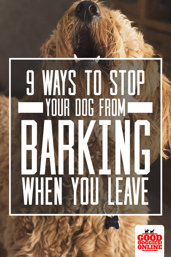 How To Stop A Dog From Barking When You Leave House Good Doggies Online Dog Training Tips Dog Training Training Your Dog