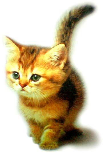 cute kitty..