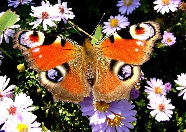 Motyle W Ogrodzie Animals Bee