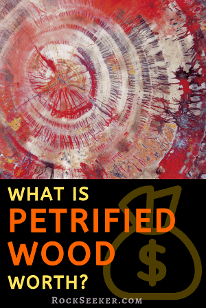 How Much Is Petrified Wood Worth Plus What Affects Value