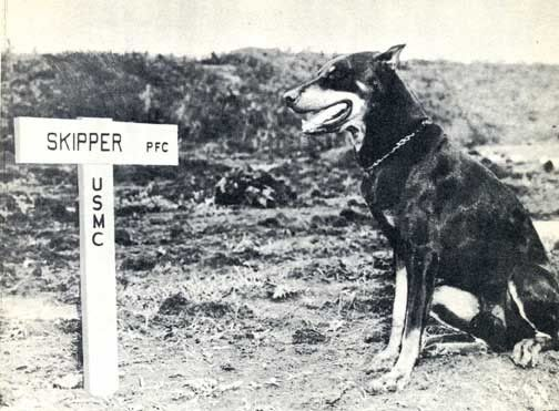 Faithful Butch, at Skipper's grave on Guam during WWII.