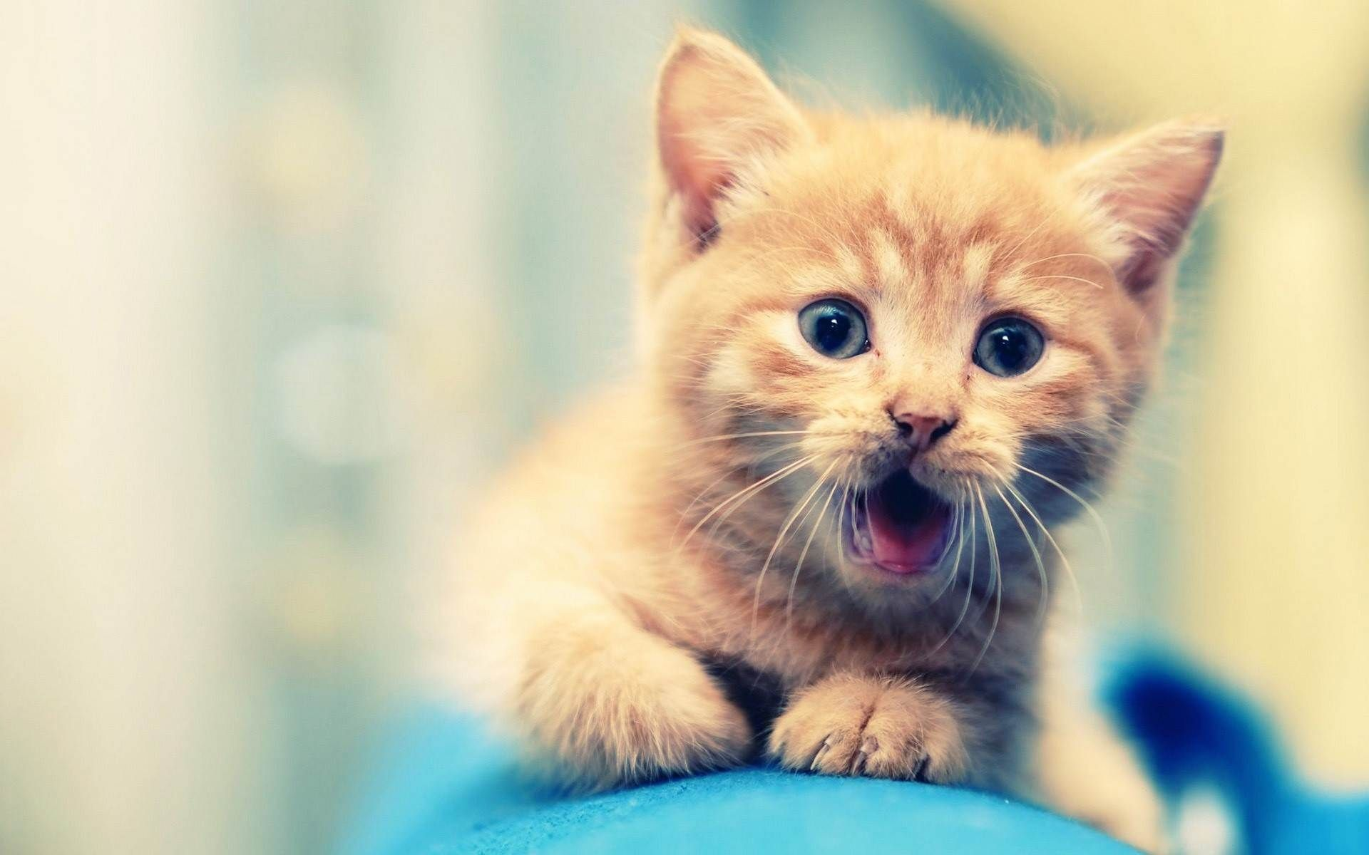 Cute Baby Animal Wallpapers Hd Wallpapers Backgrounds Images Art Photos Hd Animals Wallpapers Adorable Wallpapers Animals Animal Wallpaper Baby Animals