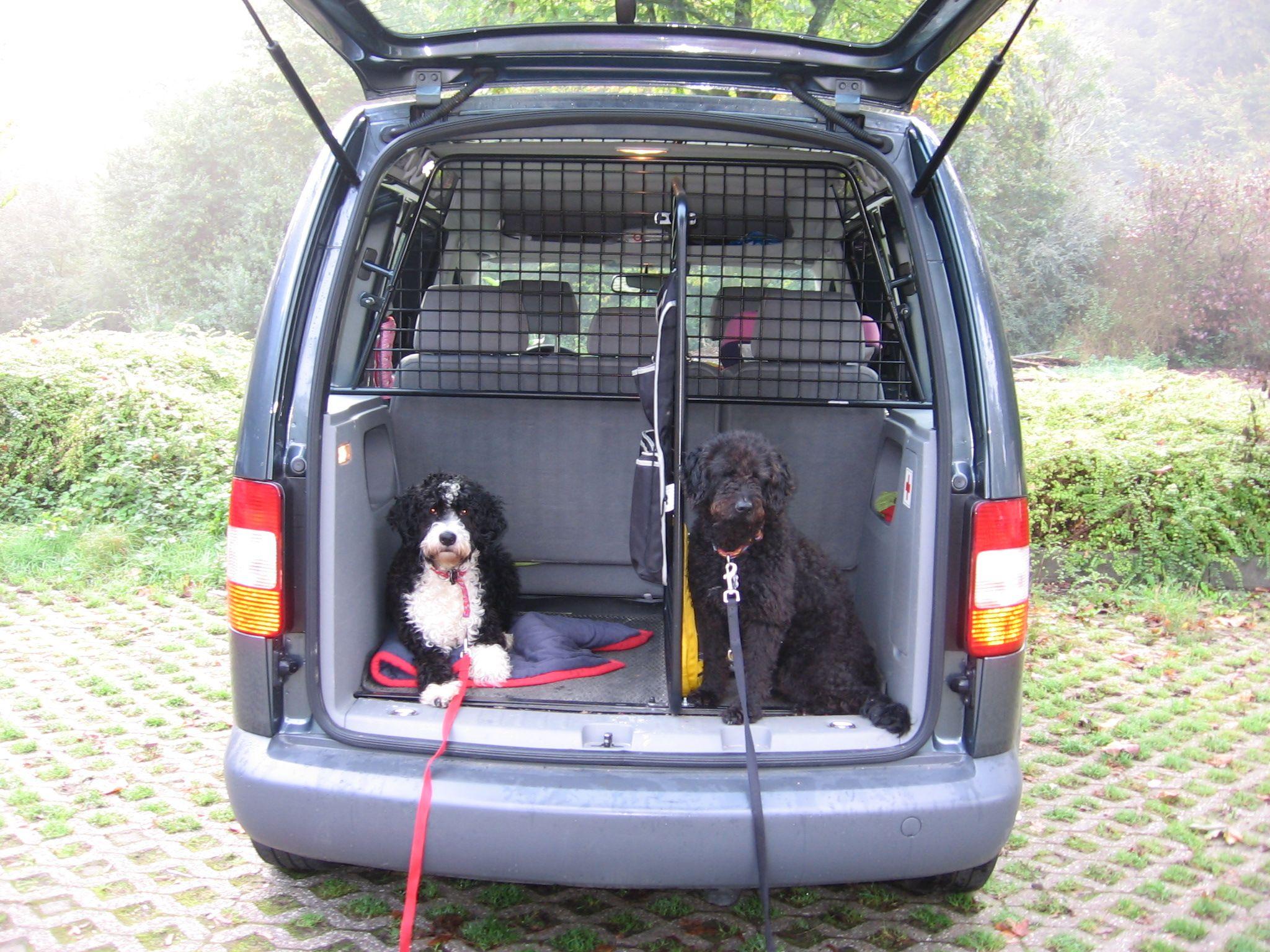 Großer Hund und Kofferraum zu \