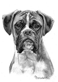 Imagen Relacionada Tatuaje De Perro Boxer Dibujos De Perros Perros Dibujos A Lapiz