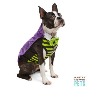 Martha Stewart Pets Vampire Halloween Costume Costumes Petsmart Pet Halloween Costumes Pet Costumes Pets