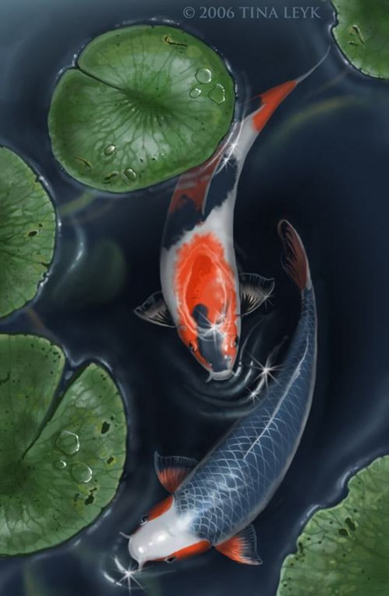 Peace meditation nearby beautiful koi fish pond design for Koi fish in pool