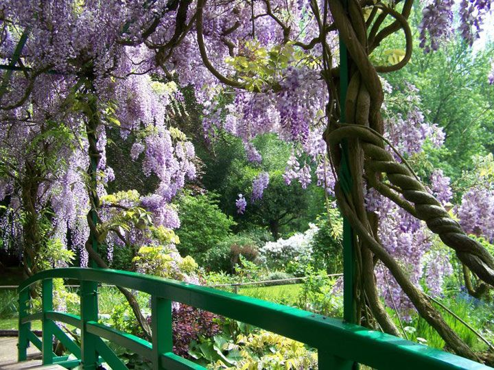 bridge and flowers in Monet's Garden