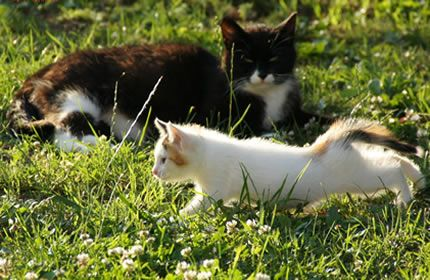 Schwarze Katze Weiße Katze Kätzchen Haustiere Tiere Frühling