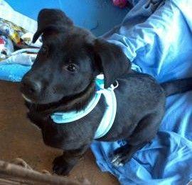 The Shelter Pet Project   Adopt A Pet----Pet Finder
