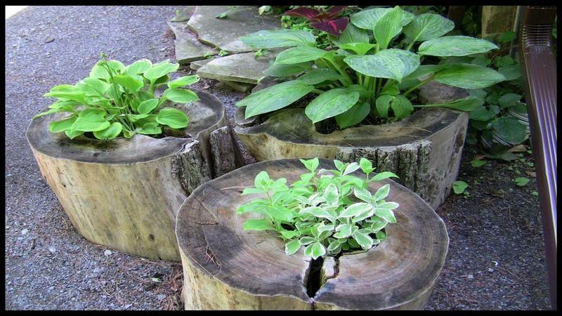 Upcycled Tree Stump And Log Ideas Tree stump planter