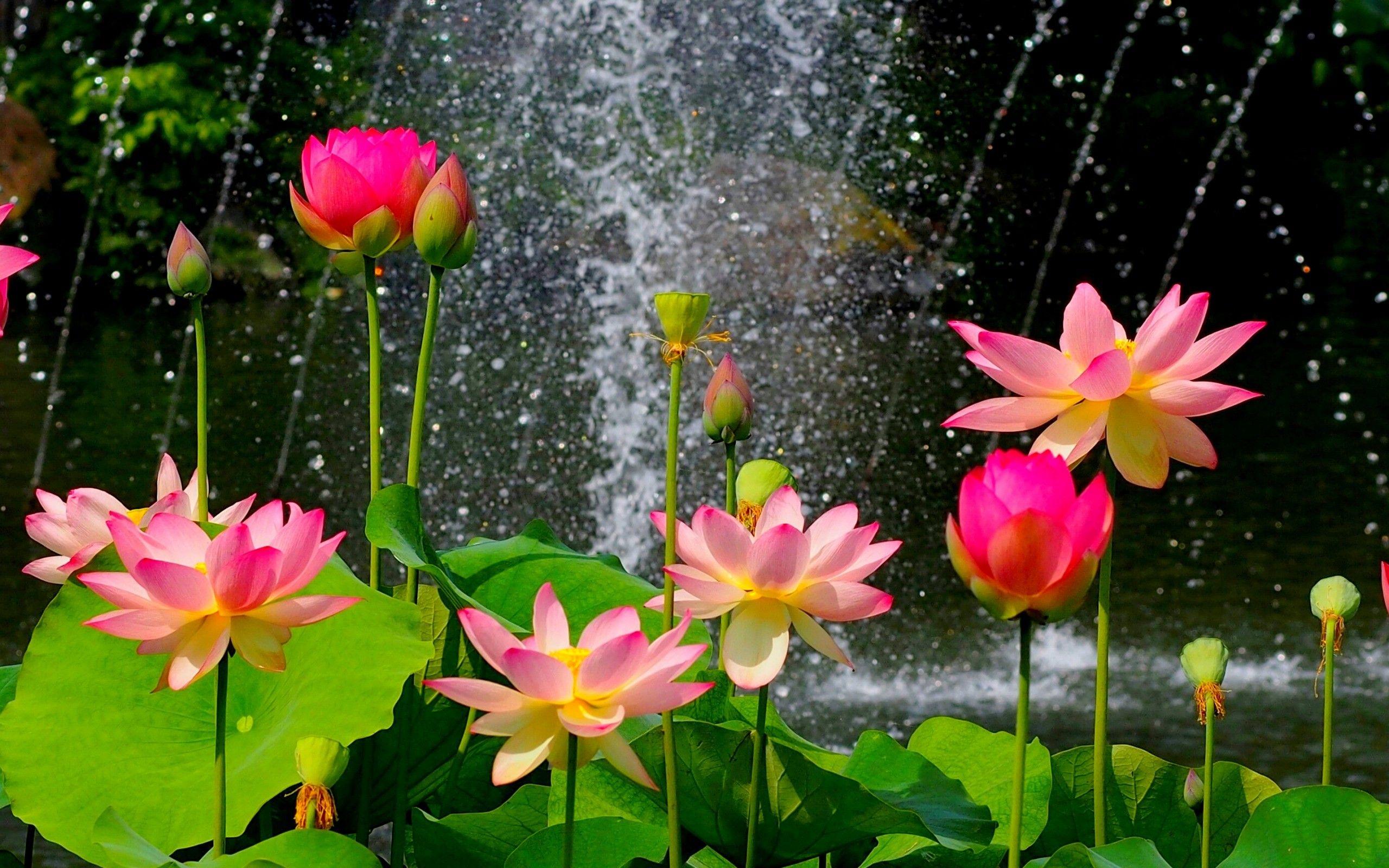 Garden Flowers Wallpaper paisajes de flores | flores en parque - 2560x1600 | ruth fotos