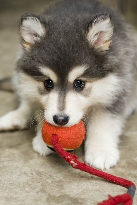 Please Mister, Don't Take My Ball…cuteeee