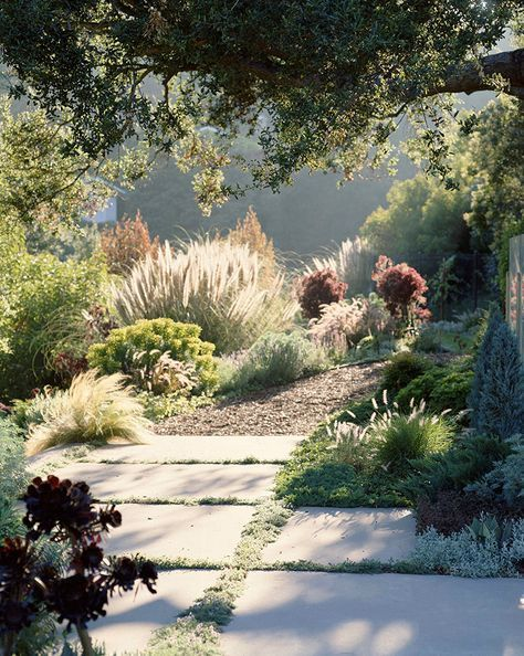 Photo of Garden growing under native CA live oak– Look at grasses catch morning light!–…