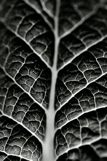 Close Up Of A Leaf Edited To Black And White Texture