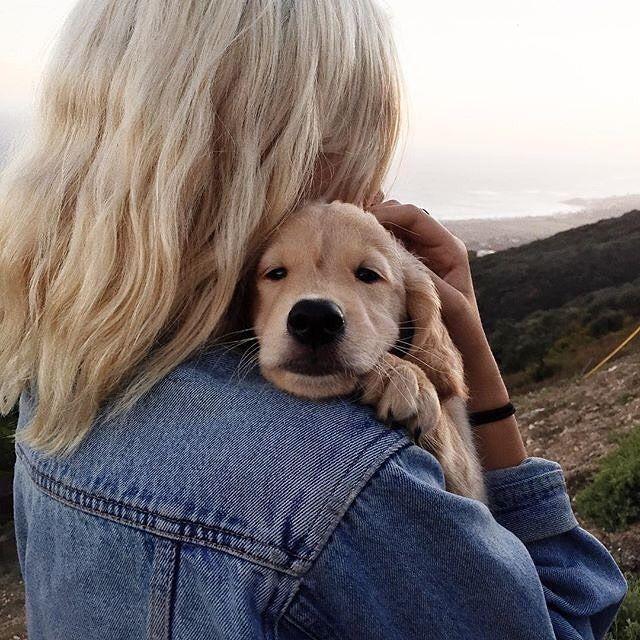 Pin Von Lara Auf Dogs Hunde Tierbabys Und Niedliche Hunde