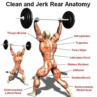 Clean and jerk | Workout-Legs | Pinterest | Anatomía, Ejercicios y ...