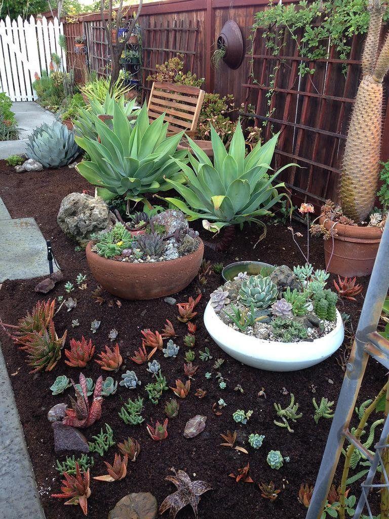 50 Ideas Para Decorar Con Plantas Suculentas Plantas