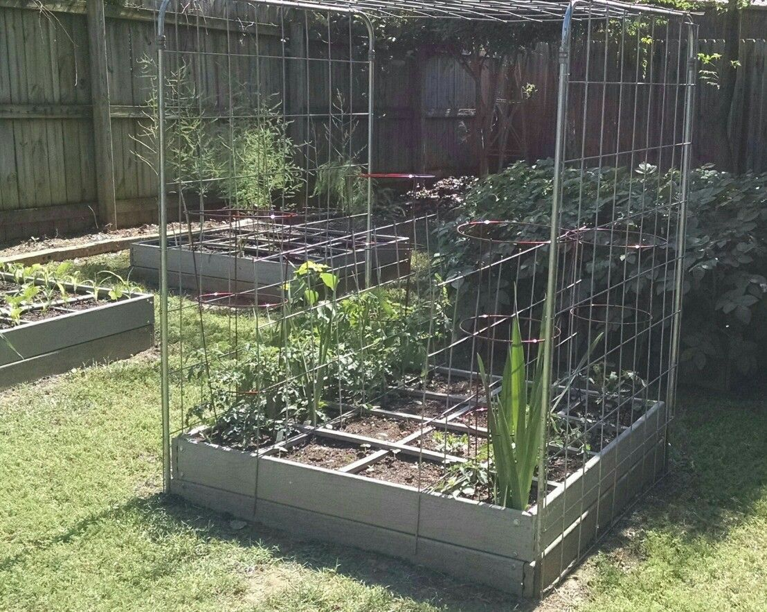 Built tomato cages for SFG.