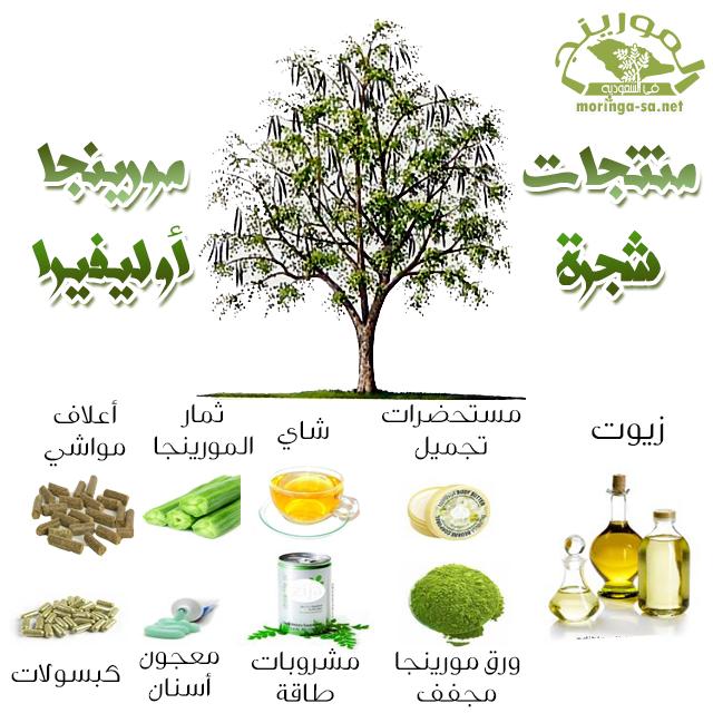 منتجات شجرة المورينجا Moringa Health Fitness Health