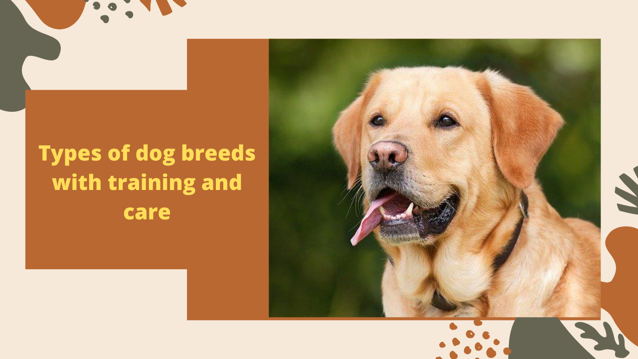Types Of Dogs Breeds Dogs For Sale Near Me Pet Supplies Small Dog Breeds A To Z Identify Dog Breed By Picture All Kind Of Dogs Pictur