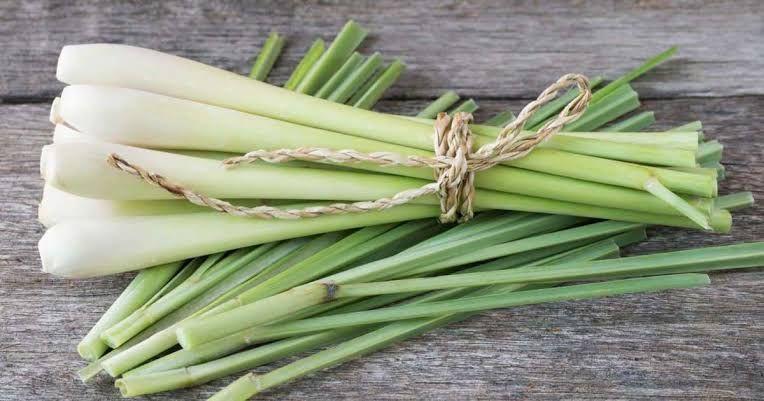 فوائد عشبة الإذخر تعرف علي العديد من الاستخدامات و الفوائد Lemon Grass Lemon Health Benefits Lemongrass Plant