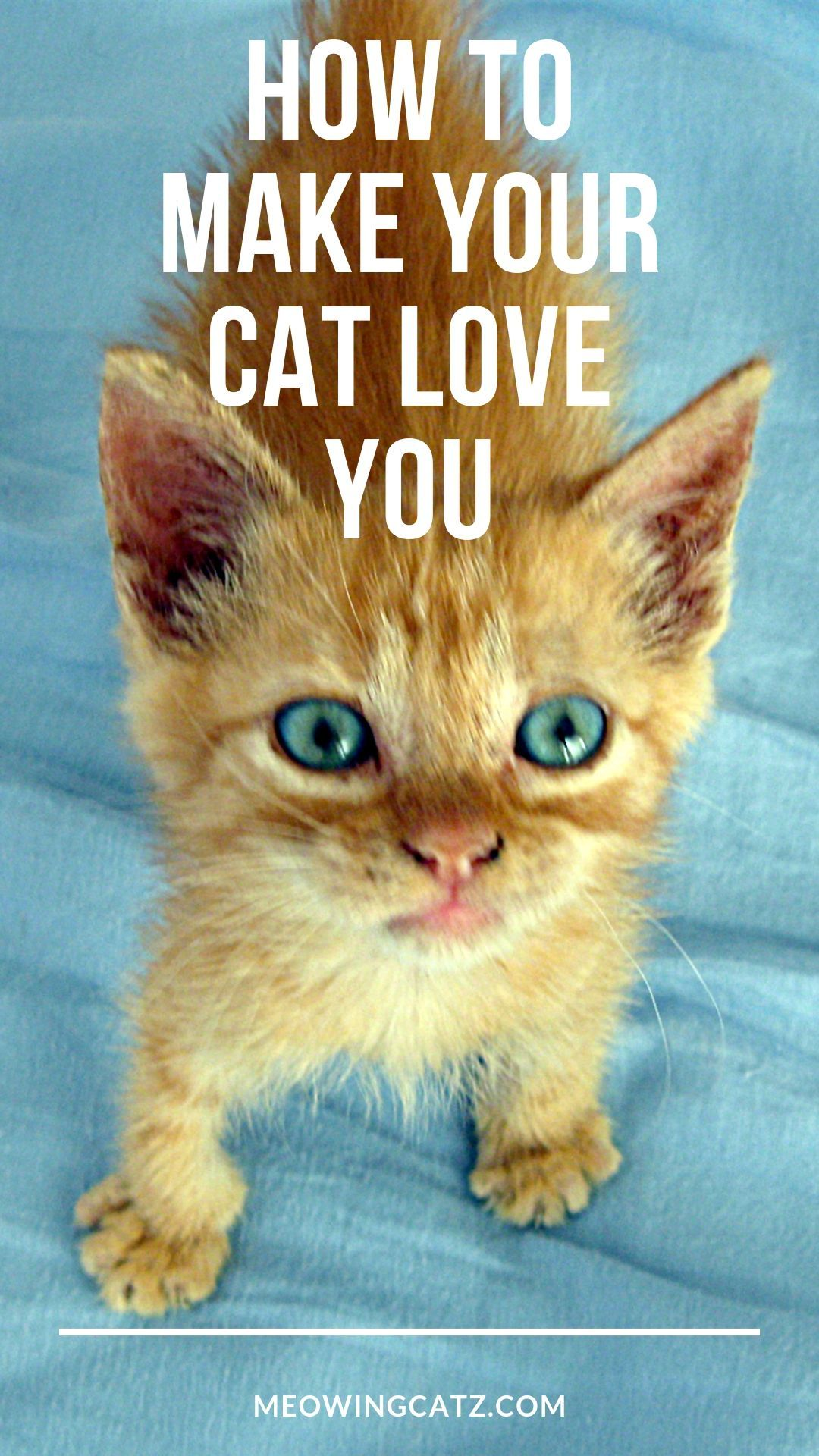 42f09f1b2097f73be90c0a2cc895339f - How Do You Get Your Cat To Like You