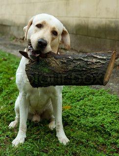 sticks are for lightweights....I got a log