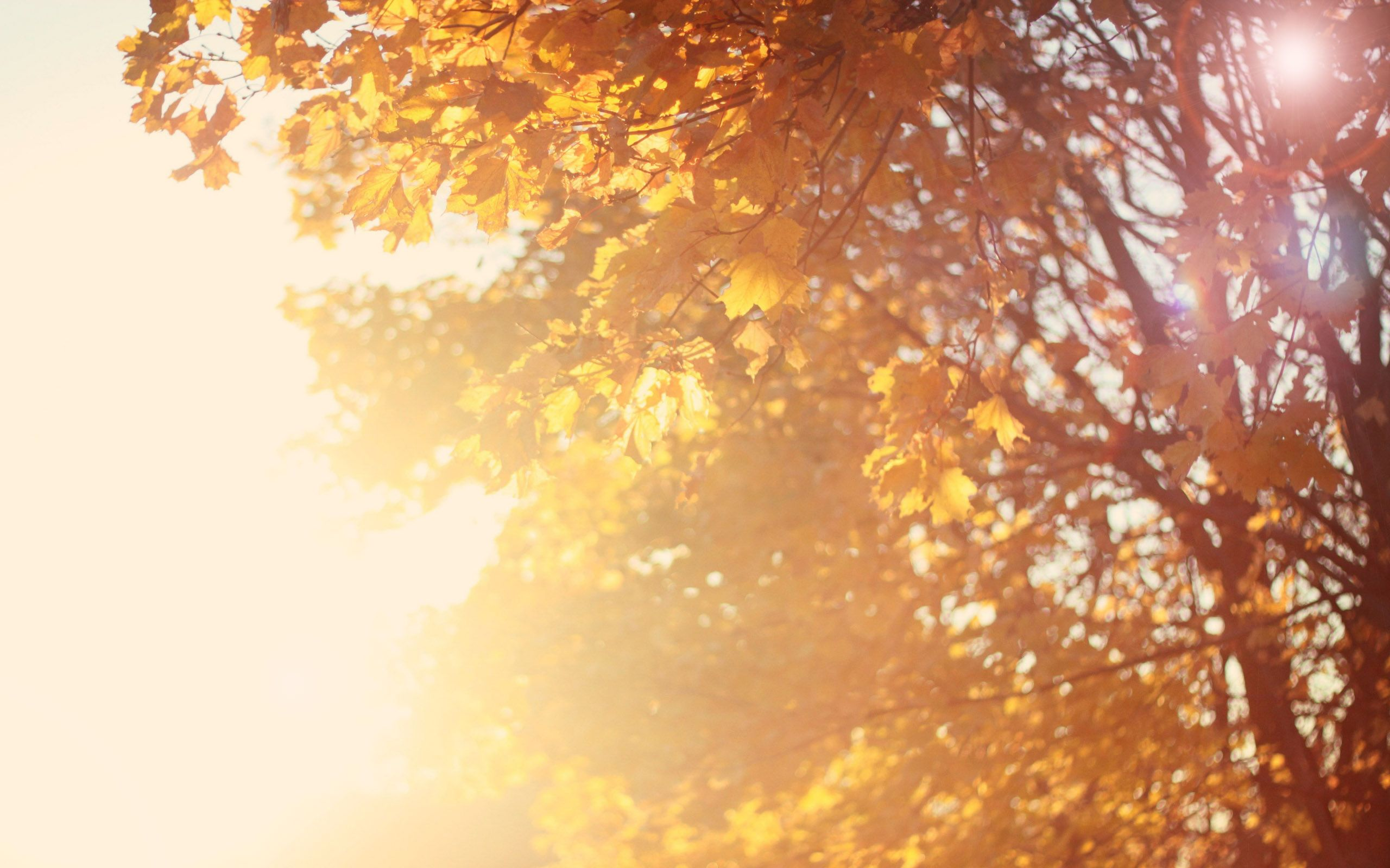 mac backgrounds hd fall autumn hd apple mac desktop wallpapers hd autumn gold mac background