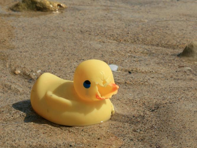 Tom Grundy\'s Travels: Rubber Ducks - lost at sea | First Grade ...