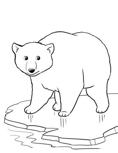 polar bear coloring pages preschool - photo#1