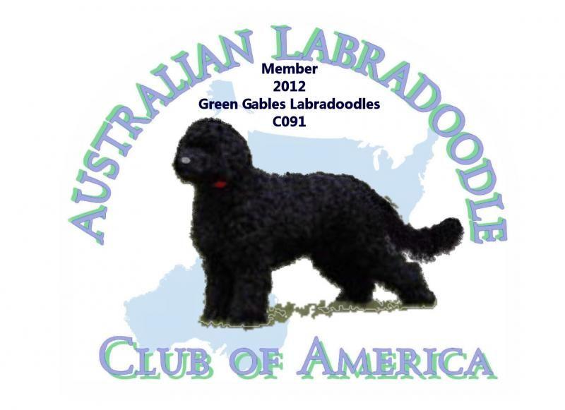 Australian Labradoodle Club of America Board Member