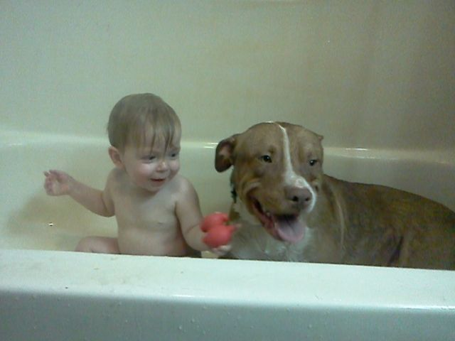 Revenge A 1 Year Old Red Nose Pitbull Taking A Bath With His