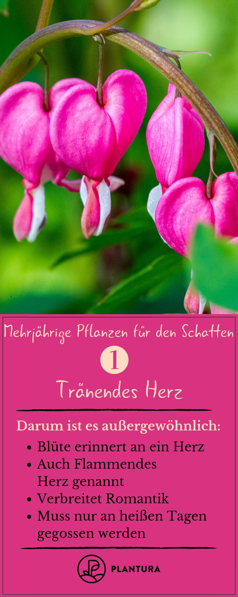 Schattenpflanzen: 16 Pflanzen für den Schatten in Ihrem Garten - Plantura #orchideenschneiden