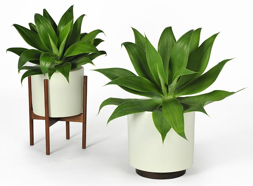 Modern potted plant