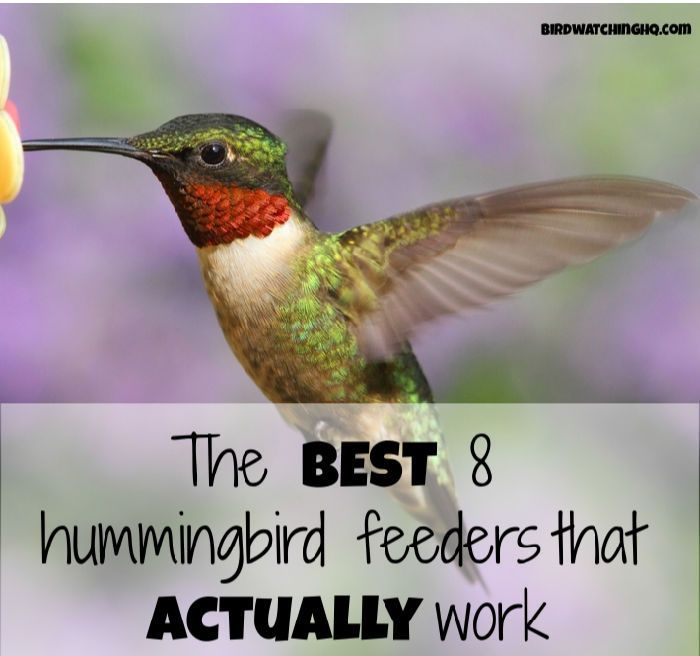The 8 Best Hummingbird Feeders (That Actually Work in 2020) | Humming bird feeders, How to ...
